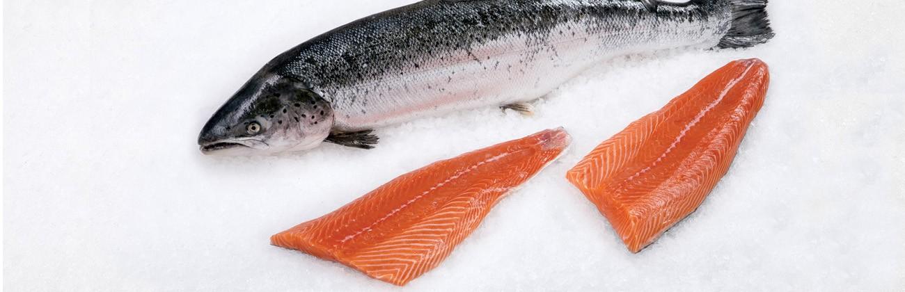 Interesse for fiskerestauranter og fisk